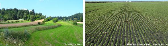 Abb. 2: Reich gegliedertes Ackerland mit Rainen, Gehölzen und unterschiedlichen Kulturen bietet zahlreichen Arten einen Lebensraum (links) und eine monotone, lebensfeindliche Ackerfläche (rechts).