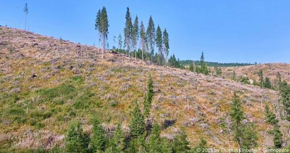 Abb. 3: Schlagflächen in den Karpaten verwandeln intakte Lebensräume in totes Land.