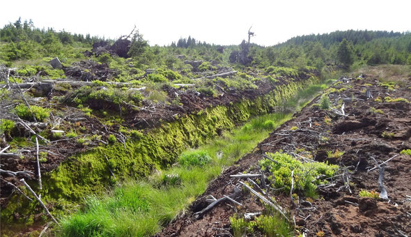 Einer der zahlreichen Entwässerungsgräben in Moorböden bei Karlstift.