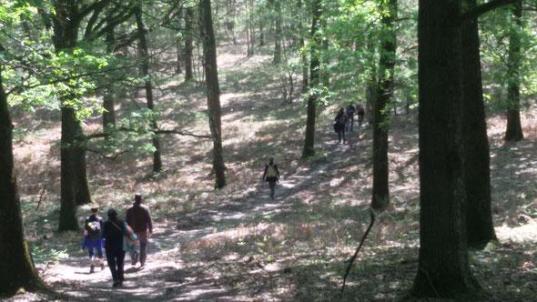 Lundi 16 mai 2016 - Dans  les  bois de Saint  Arnoult en  yvelines vers  Rochefort  en  Yvelines