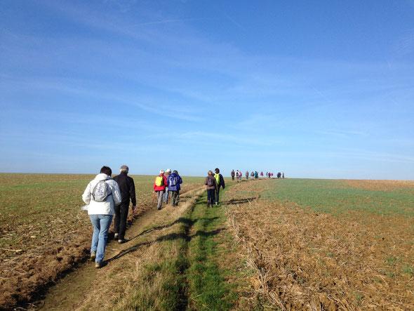 marche de  8km  -  Moru  - 29 octobre 2016 .