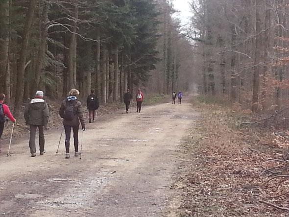 sur le chemin du retour - chacun son rythme  dans  la forêt de  Halatte  - 15 02 2014