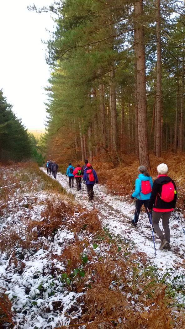 Hiver 2017 .  Marche Nordique en forêt .