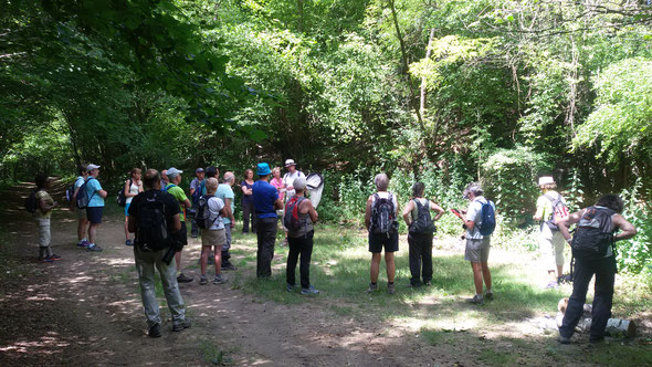 Marais de Bourneville avec Franck guide du Conservation d'espace naturel des Hauts de France .  08 juillet 2017