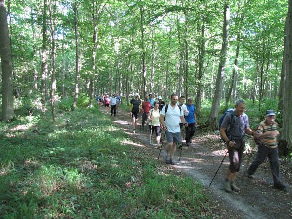 Dans  la forêt , vers les  étangs de Comelles .