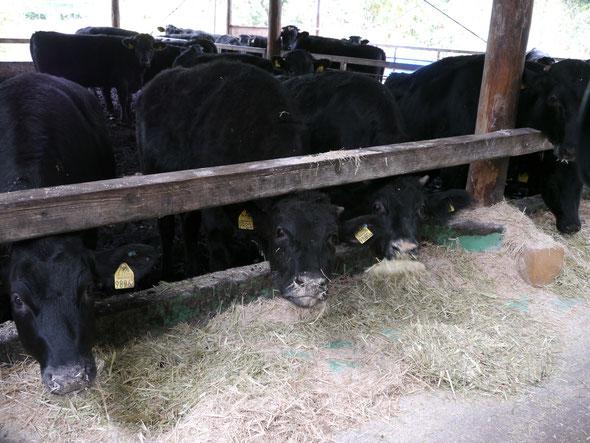 九州産牛肉(すすき牧場)