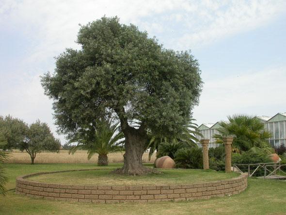 Piante per la casa e il giardino la serra fiorita assemini for Vendita piante da frutto sardegna