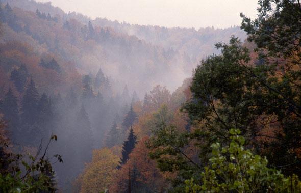 Herbstnebel über der Buchberger Leite. (02. November 1992)