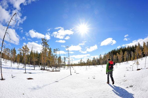 Auch wenn weder Ski noch Schneeschuhe nötig waren - der Hamra bietet vor allem in seinem neuen Teil tolle Skiwandermöglichkeiten.