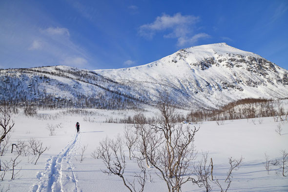 Lonketind, Senja, Skitour