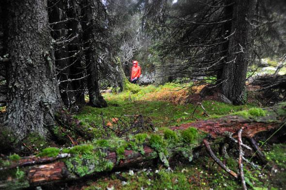 Einsame Wälder und weite Hochmoorflächen kennzeichnen den 2011 gegründeten Park.