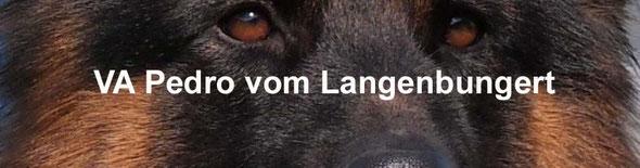 Link/Banner zur VA Pedro Langenbungert