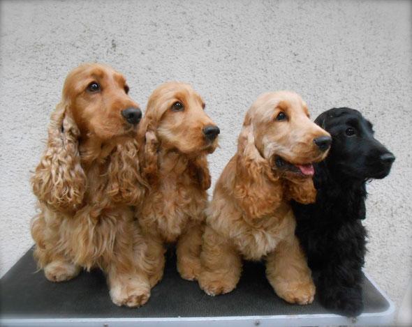 Liam, Juni, Pedro & Rosie