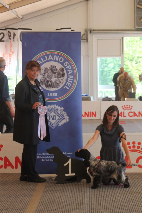 ZAHIRCOCKER DREAM TEAM MADDIE CLAYBOURNE - BEST PUPPY IN SHOW