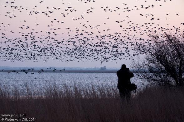 Natuurfotograaf in actie