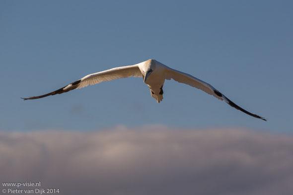 Vliegen als een Jan van Gent