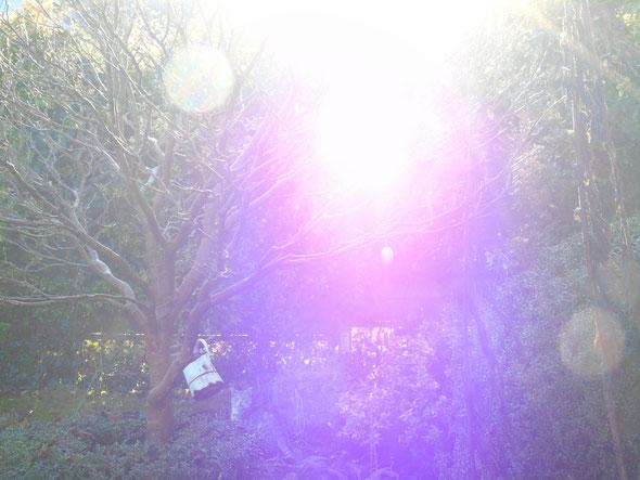 """©www.lichtwesenfotografie.com """"Energiebälle und violette Energie der Transformation (hier: Für Weiblichkeit und innere Priesterschaft)"""""""