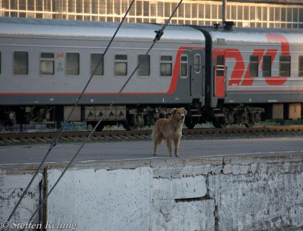 """Bahnsteigaufsicht"" in Moskva Kiewer Bahnhof / Киевский вокзал (21. Mai 2012)"