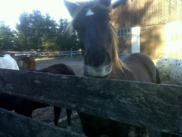 Pferde haben unseren Kontakt gesucht