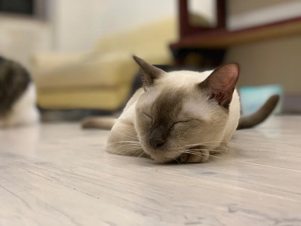 ねこコレ 新潟 猫