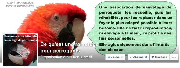 Perruches et Perroquets : alimentation, environnement, et soins. - Portail Image