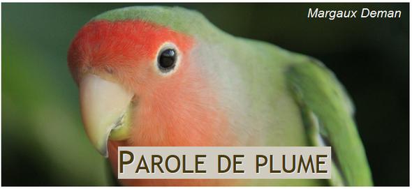 Comportementaliste aviaire
