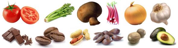 recherche de liquidation classique chic nouveau style de vie Aliments toxiques - Perruches et perroquets