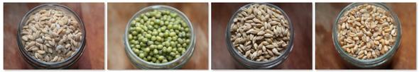 graines à germer