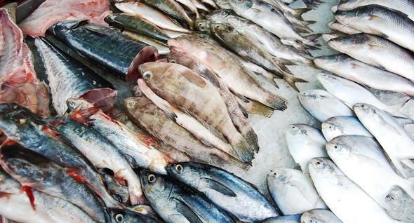 Fische zum Verkauf