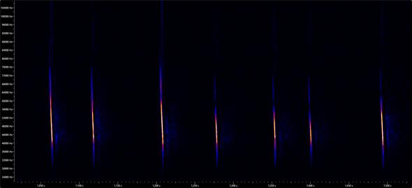 Spektrogramm der Fransenfledermaus (Myotis nattereri) KUHL, 1817 mit fehlenden Rufanteilen der Oberfrequenzen.