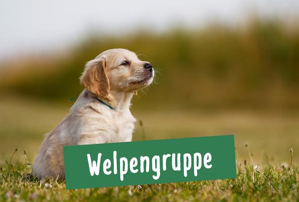 Ein kleiner Hund aus der Welpengruppe sitzt in Hamburg Ottensen auf einer Wiese