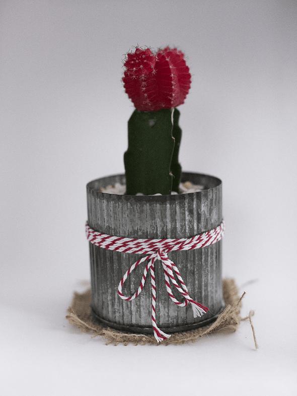 Cactus photographié dans une boîte à lumière avec un appareil photo Canon
