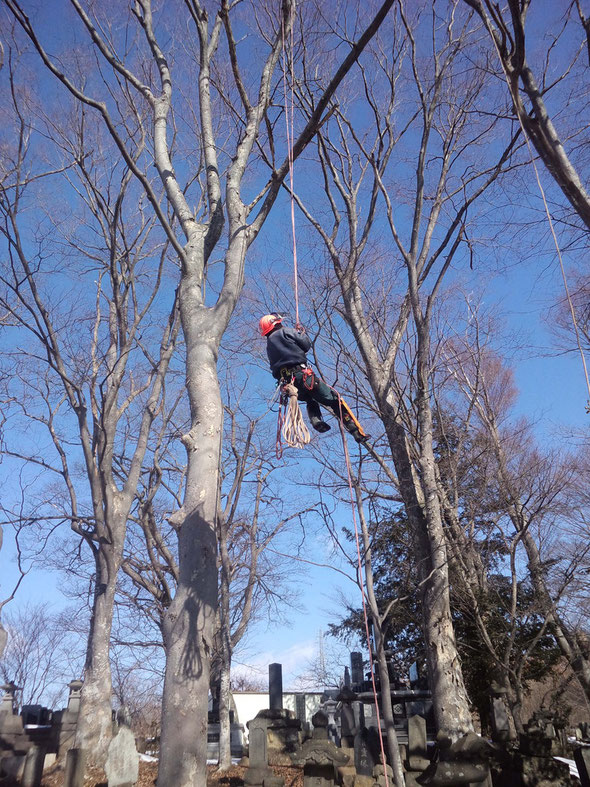 こうやって木に登り