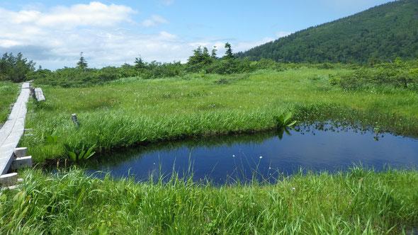 毛無岱の池塘