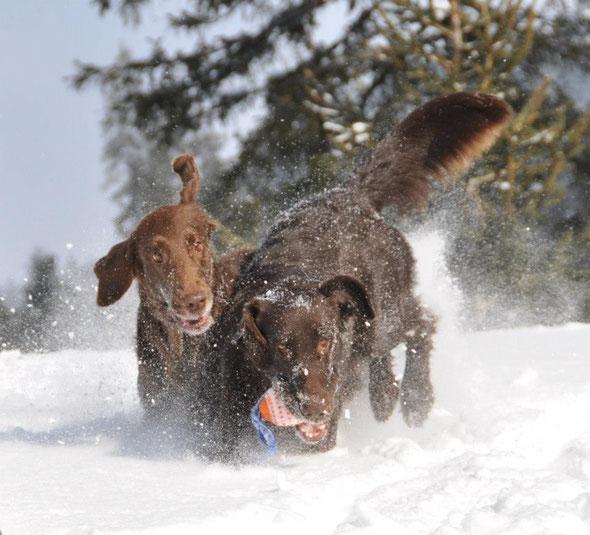 Schnee, Schnee, Schnee, mehr klick aufs Bild!