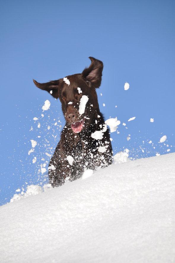 30.12.2013 Spass im Schnee, mehr Klick aufs Bild!