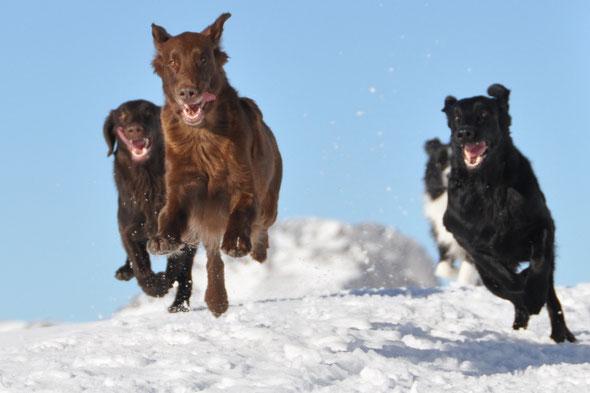 5.1.2013 Schneeschuhwanderung hoch bis zum Nüjestift - ein riesen Spass für die Hunde