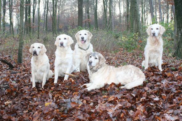 Aspen, Abanée, Jaser, Ami liegend und Mabel