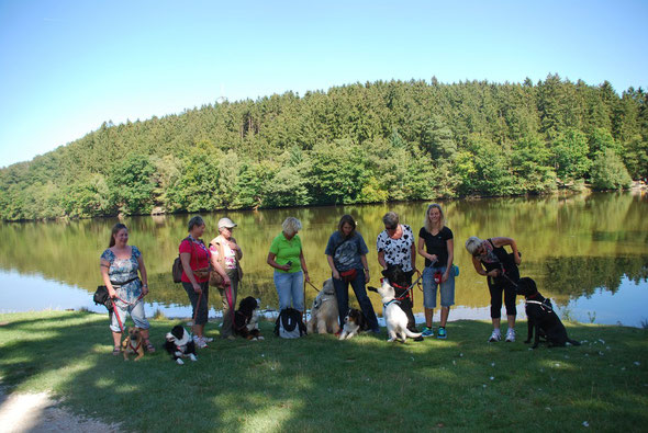 Unsere Hunde entdecken die große Tierwelt