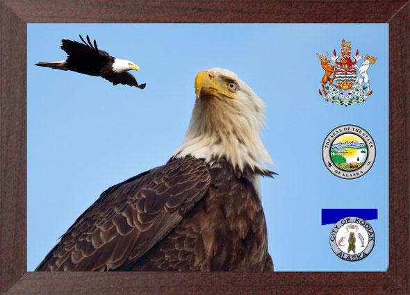 Der Bald Eagle war auf diesem Tourabschnitt unser ständiger Begleiter, ein majestätischer Vogel