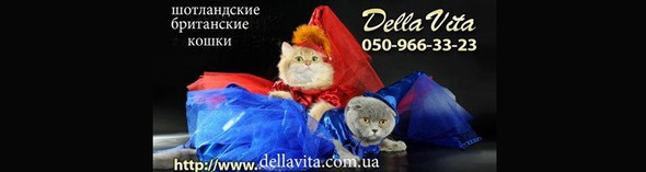 Британские и шотландские котята драгоценных окрасов