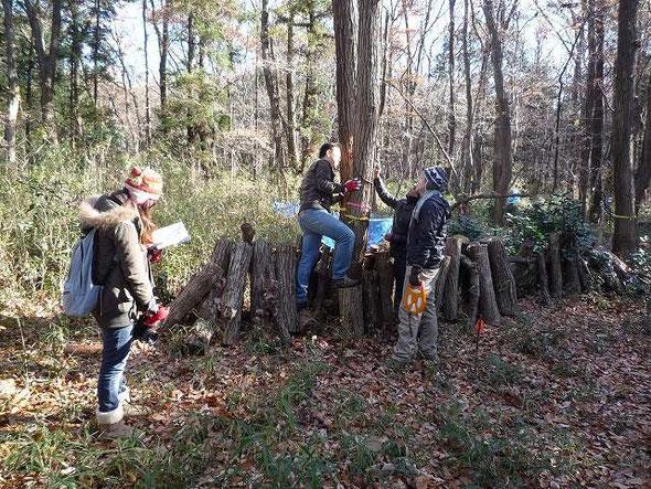 伐倒予定の樹を一本毎にチェックする留学生達