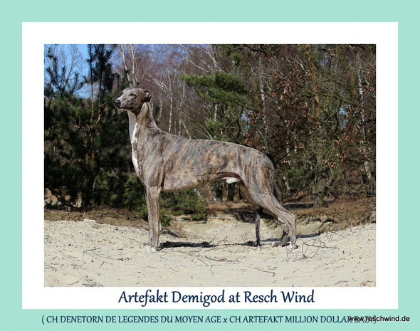 Artefakt Demigod at Resch Wind