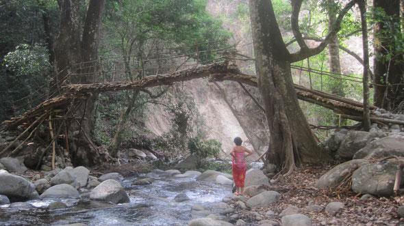 Reserva Biologica Caoba -  Puente Kogui