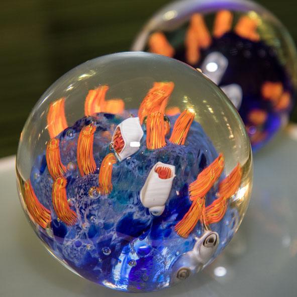 Reinhard - Foto 6 - Meereswelt in Glas gehüllt