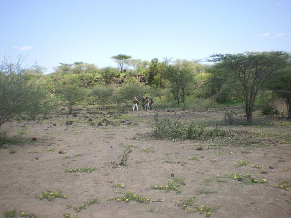 Doho. Terrain alloué à l'association en vue d'y créer un centre d'entraînement. Ce terrain voisin de la réserve, recèle une importante source d'eau chaude. La vue est prise en tournant le dos à lendroit d'où la source jaillit.