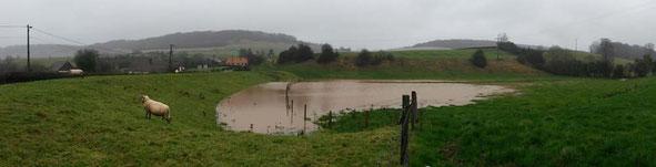 Prairie inondable à Osmoy-Saint-Valery