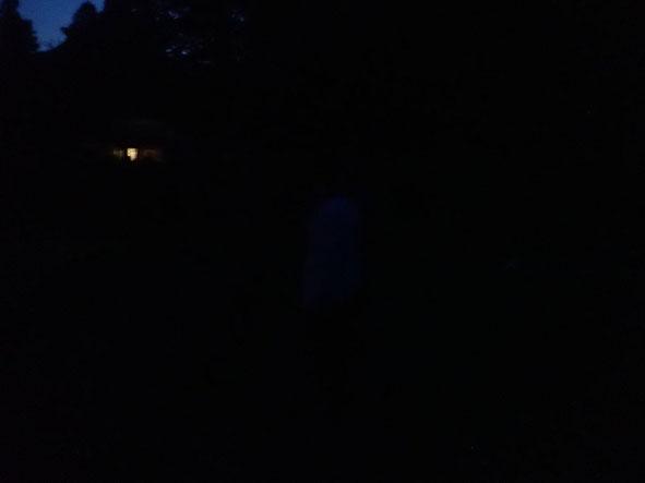 写真には写っていませんが、蛍光グリーン(蛍光イエロー)の光が無数に舞っています