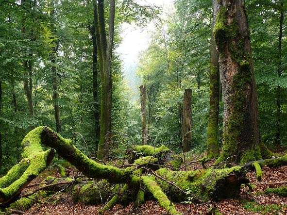 Naturschutzgebiet  Metzger  Foto copyright: M.Kunkel