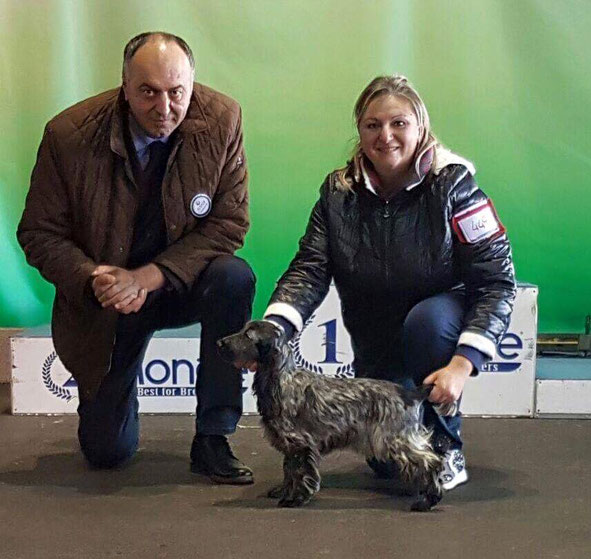 Zahircocker Dream team Blue Velvet  - Best Puppy in the breed - IDS Ostuni 2016